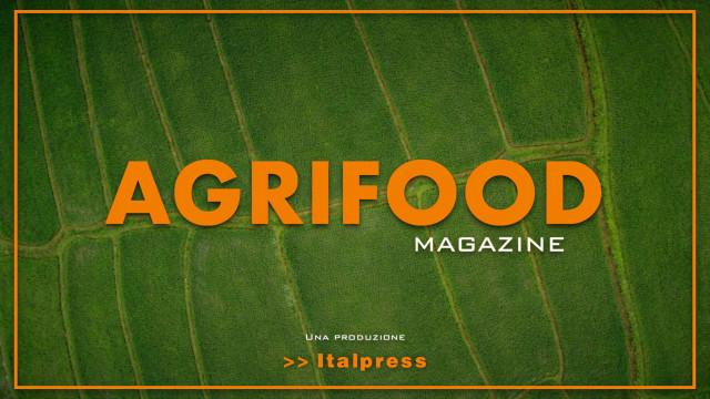 Agrifood Magazine - 6/10/2021