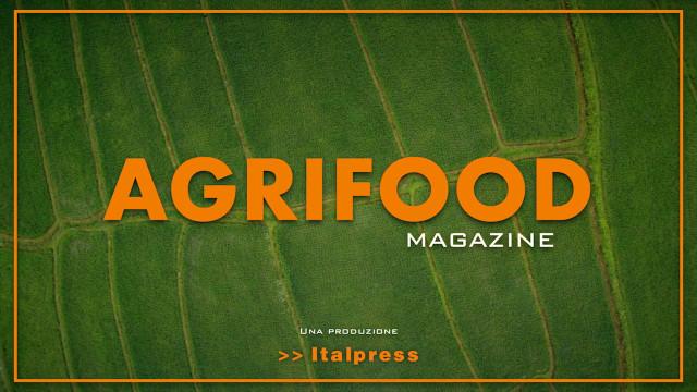 Agrifood Magazine -13/10/2021